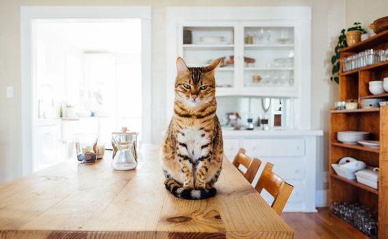 Navodno i mačke mogu osjetiti potrese