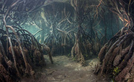 Mangrove pod vodom