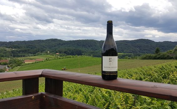 Rajnski Rizling s pogledom na vinograd u vinariji Kopjar