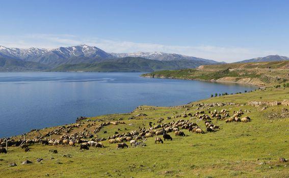Jezero Van u Turskoj - 2