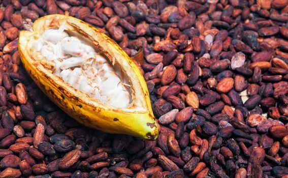 Čokolada - 2