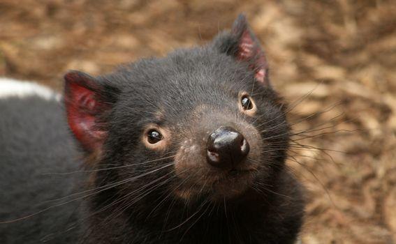 Tasmanija - 5