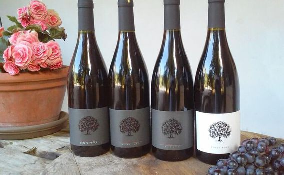 Tilia Estate Pinot Noirs