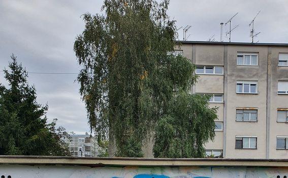 Graffit posvećen ljetu (fotografirano sa Samsung Galaxy Note10+) - 6