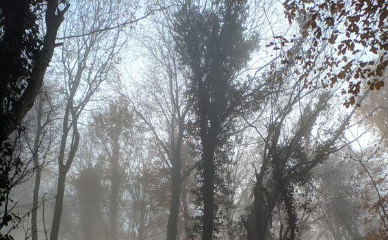 Kameni svati, Medvednica - 10