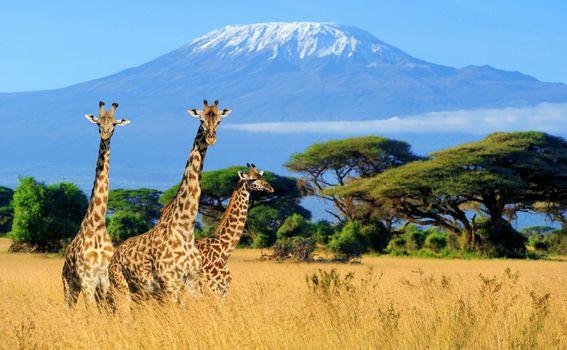 Nezaboravni safari u Keniji