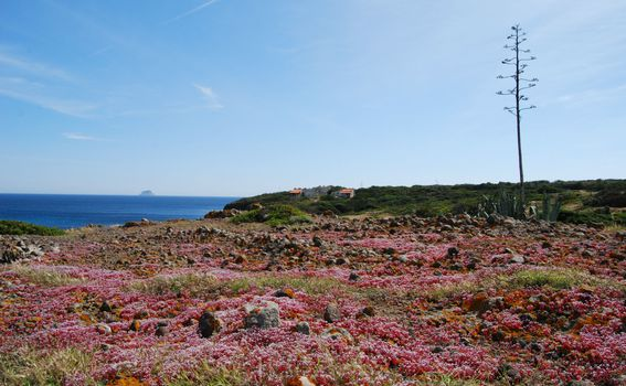 Prekrasni otok