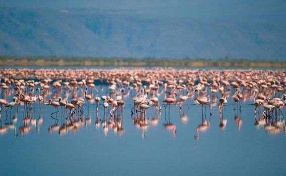 Jezero Natron, Tanzanija - 5