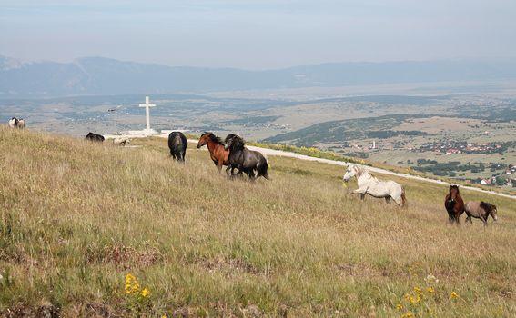 Divlji konji - 1
