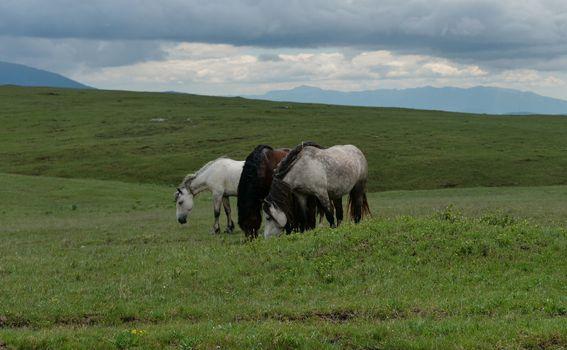 Divlji konji - 3