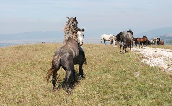 Divlji konji - 4