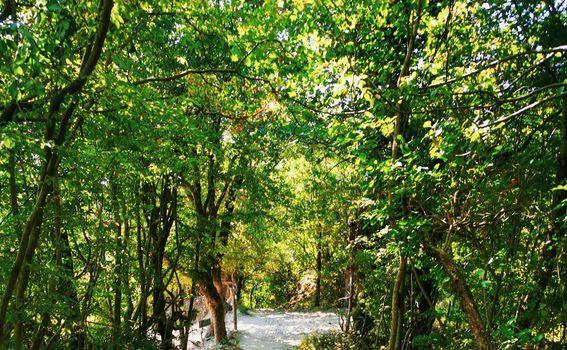 Labin - Rabac planinarske staze - 7