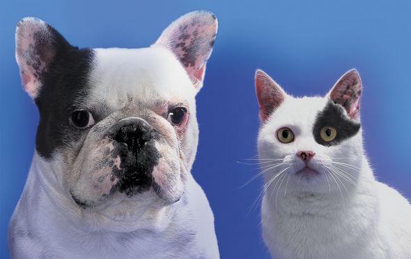 Karlovac: Uvedena obveza sterilizacije pasa i mačaka