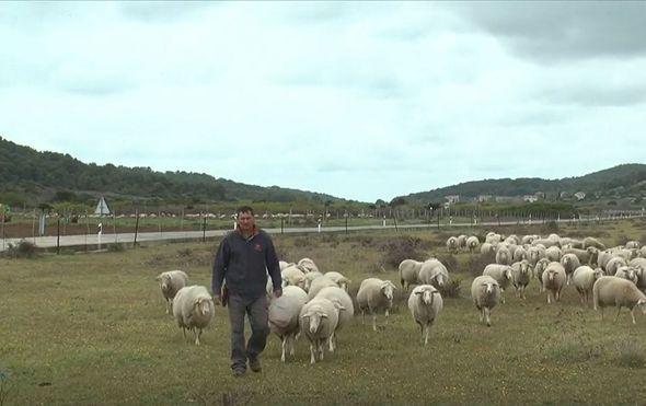 Velimir Mratinić s ovcama
