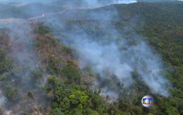 Znantvenici tvrde: Iza požara u Amazoniji krije se međunarodna glad za govedinom i sojom