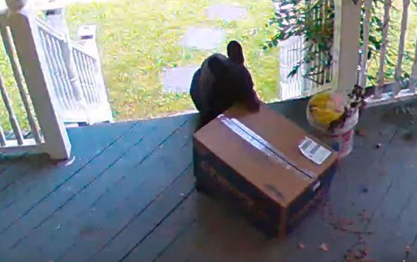 Medvjed krade paket (Foto: Screenshot/YouTube)