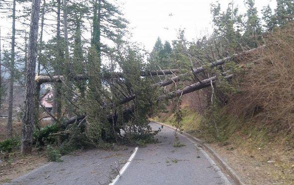 gorski kotar u potpunoj blokadi zbog vjetra i opasnosti od pada stabala zatvorene sve drzavne zupanijske i lokalne ceste