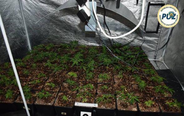 Policija otkrila laboratorij marihuane (Foto: PUZ) - 1