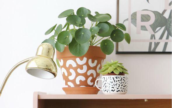 Pilea peperomioides (Kineski dolar) je biljka koja privlači energiju bogatstva i blagostanja - 1