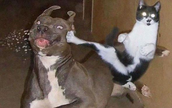 Psi i mačke (Foto: Imgur/Twitter) - 12