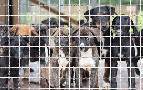 """Dumovec u problemima: """"Ovoliki broj odbačenih štenaca prizor je kakav zastrašuje, nadamo se da će uskoro pronaći svoj dom"""""""