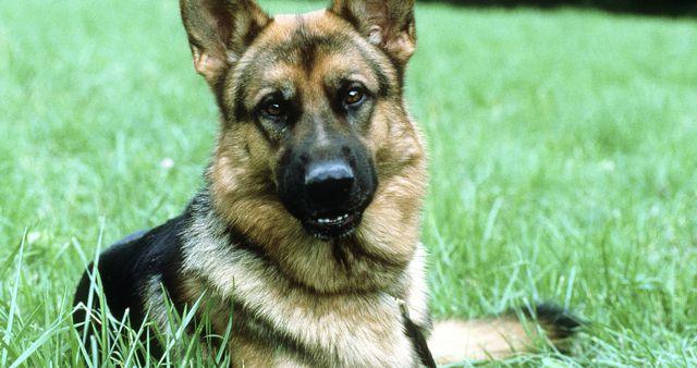 Inspektor Rex, 4. sezona