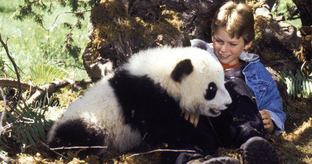 velika pandina avantura