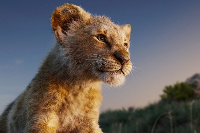\'Kralj lavova\'