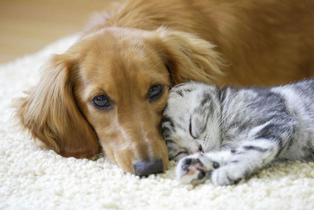 Pas i maca