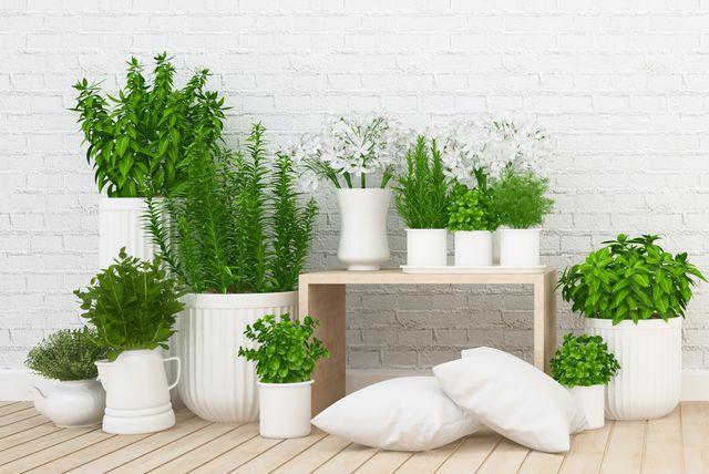 Vaše omiljene biljke ne moraju uvenuti ako idete na godišnji odmor