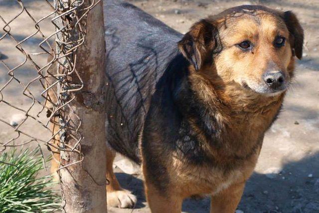 Psi iz romskih nasilja trebaju našu pomoć
