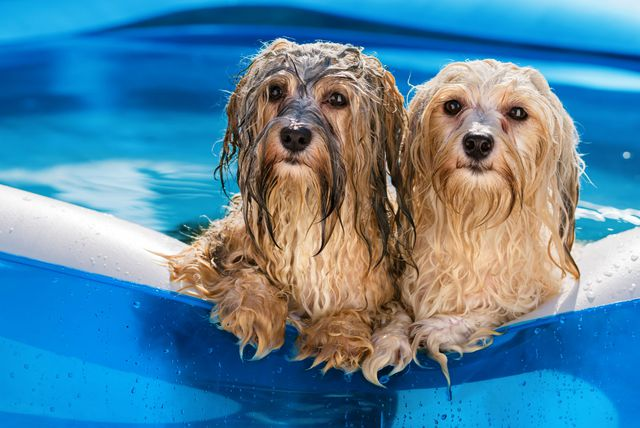 Psi se hlade u vodi