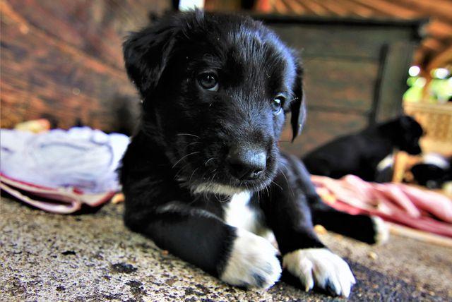 Štenci iz udruge Kako psi komuniciraju, koji se udomljavaju, zvijezde su kampanje \'Prva četiri su najvažnija\' - 3