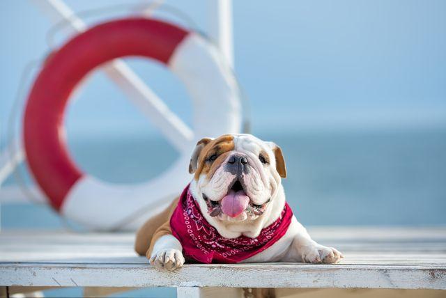 Pas na moru