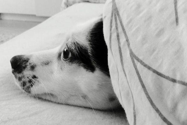 Bella je unijela vedrinu u dom