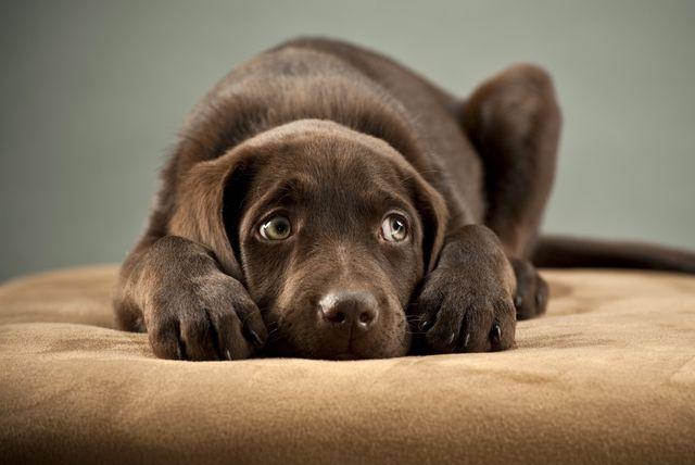 Uplašeni pas