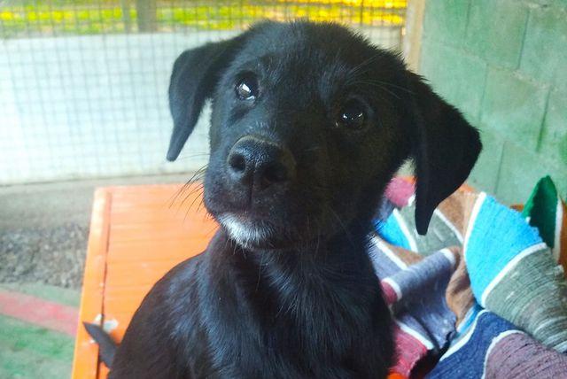 Osječka Udruga Pobjede organizira sajam za pomoć psima u azilu - 1
