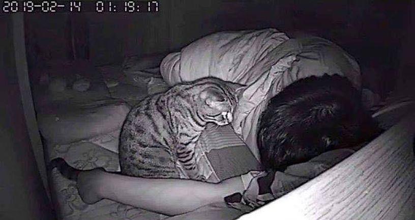 Mačka (Foto: Twitter)