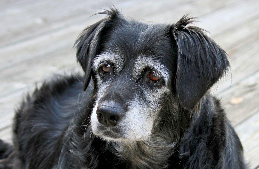Udomite li starijeg psa dobit ćete najzahvalnijeg prijatelja