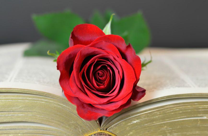 Knjiga s ružom