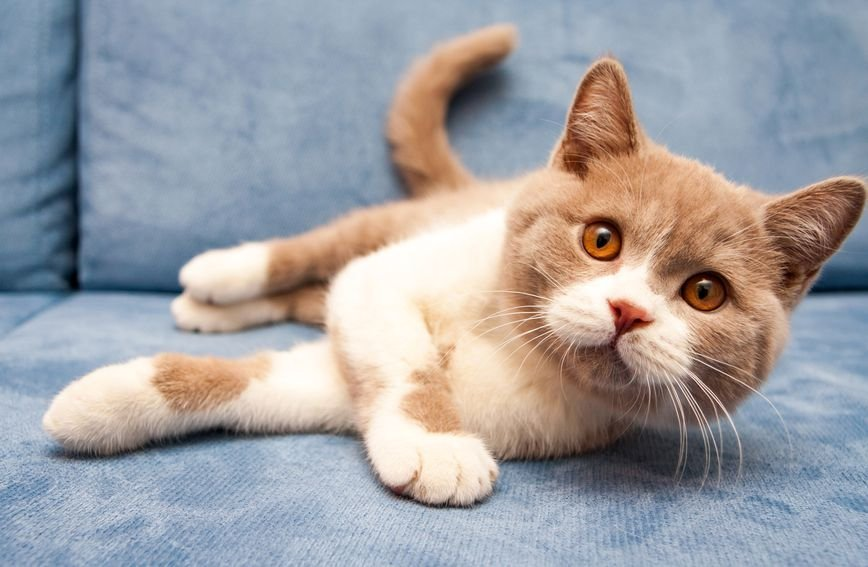 Mačke su poznate po svojoj netrpeljivosti prema vodi