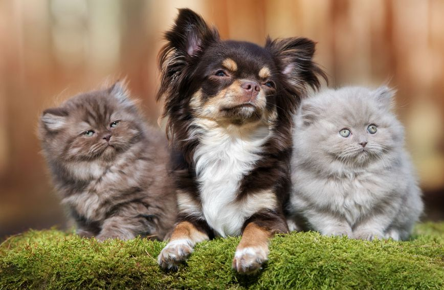 Psić i dvije mace