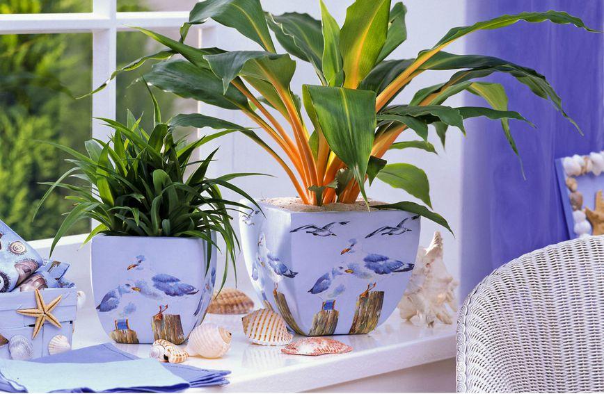 Sobno bilje divan je ukras svakom domu, ali ako je uvenulo i nije nam baš na ponos