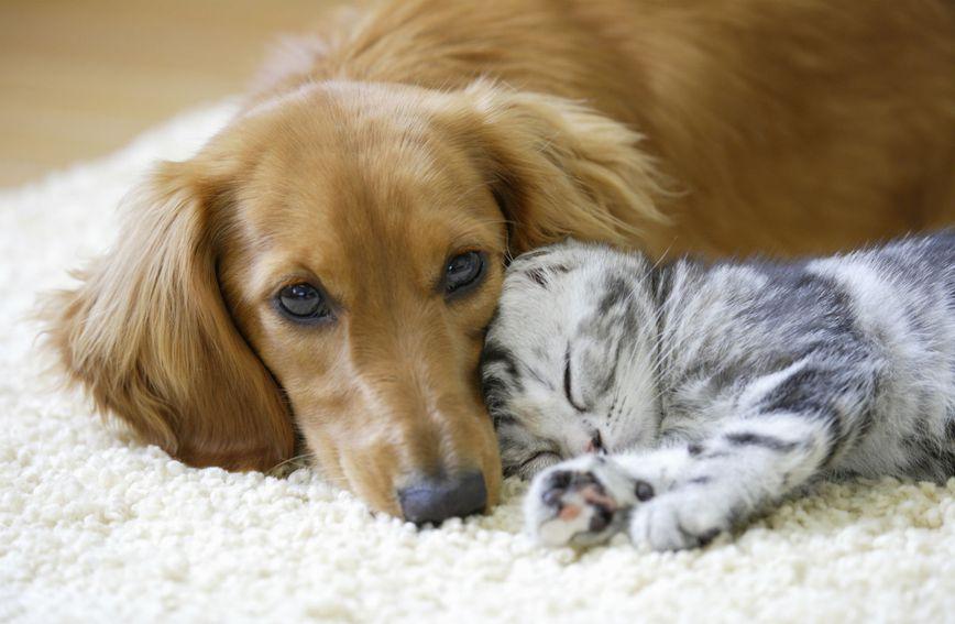 Sve više građana odlučuje se na udomljavanje psa ili mačke