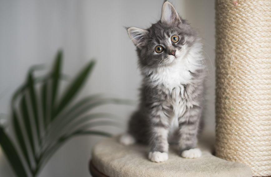 Vlasnikova osobnost utječe na ponašanje mačaka