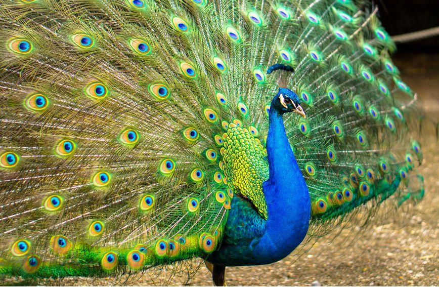 Poznati po duhovnosti i smislu za ljepotu kojom nadahnjuju druge, vodenjaci su poput pauna u punom sjaju