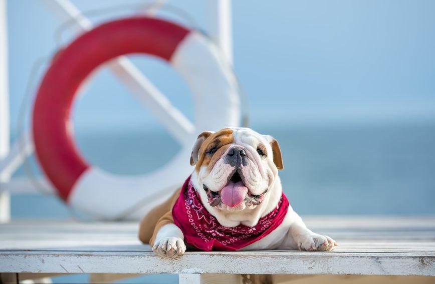 Umor uslijed visokih temperatura kod pasa se može dogoditi u roku od 15 minuta od izlaganja visokoj temperaturi