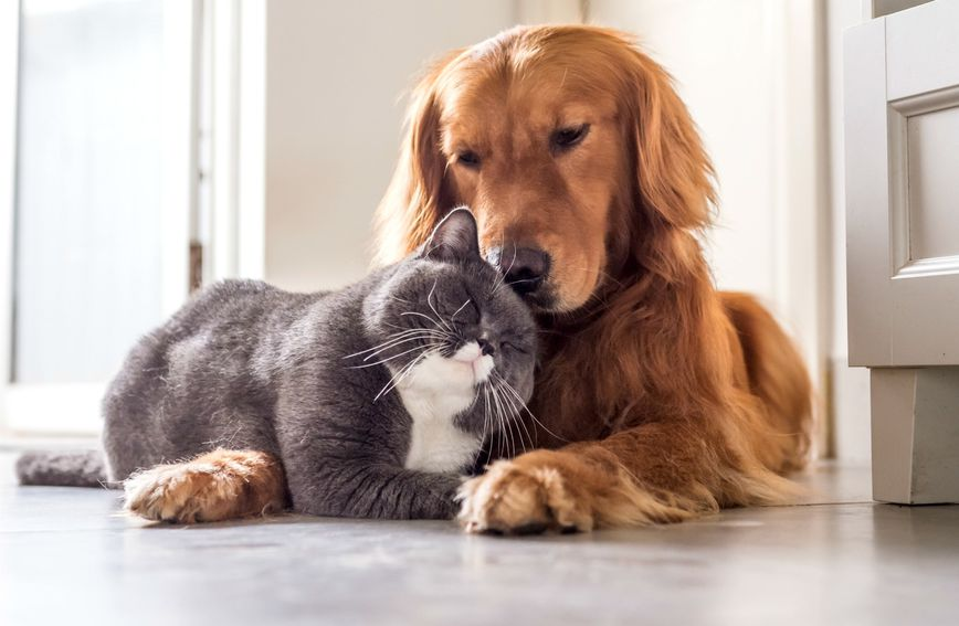 Volite li više mačke ili pse?