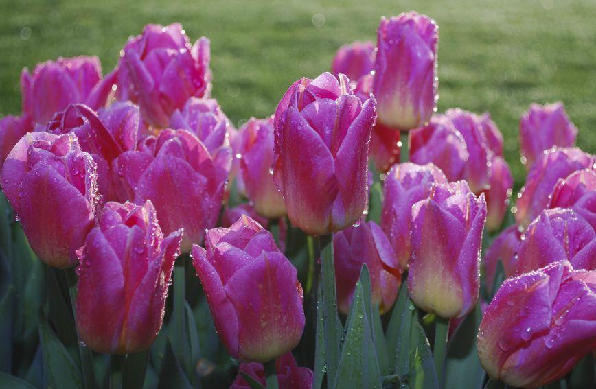 Rosa ili Kiša su imena i prezimena nadahnuta meteorološkim pojavama