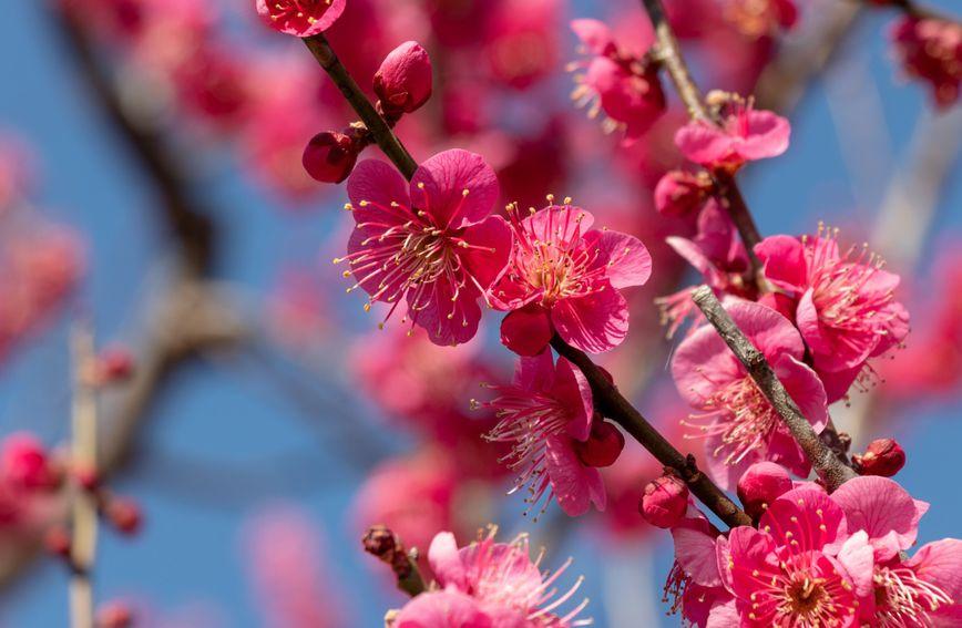 Baš poput prirode koja se u ožujku budi, osobe rođene u ovom mjesecu pune su poleta i zanosa